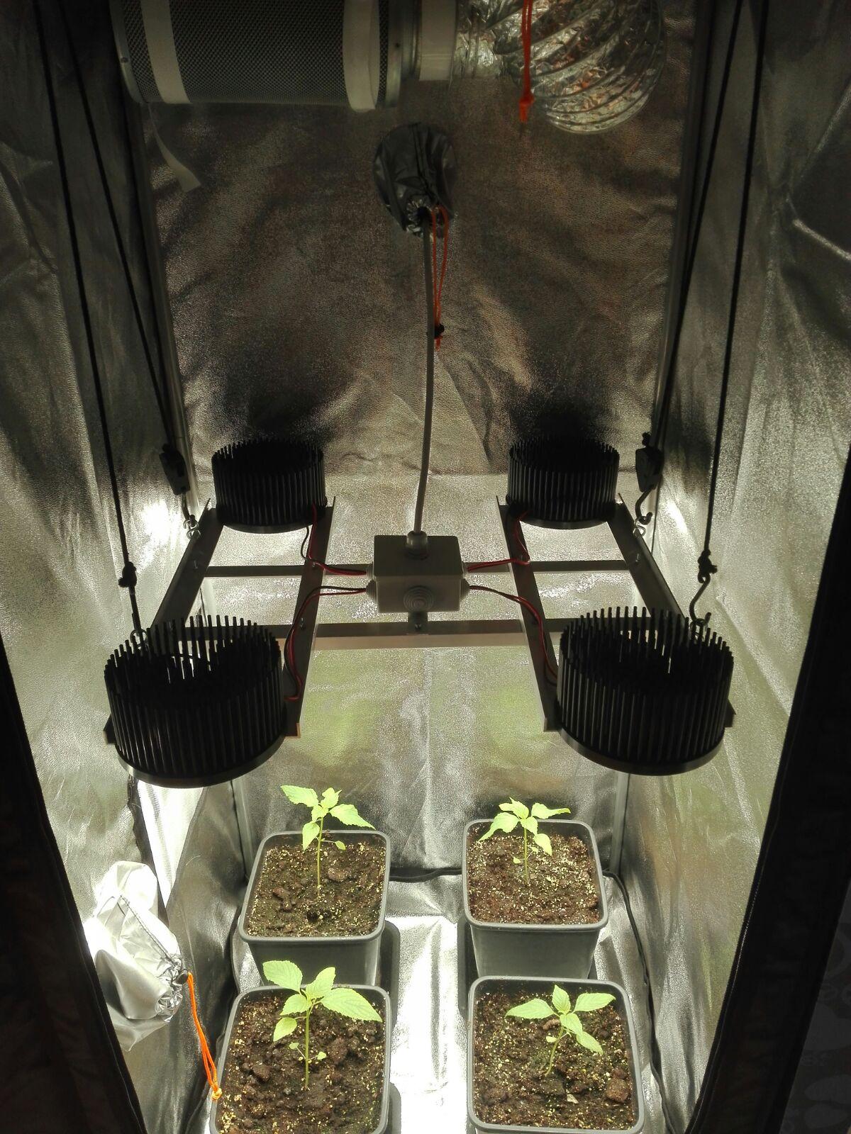 growbox 60x160 completa