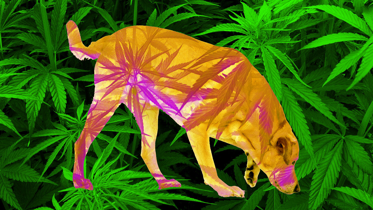 L11 - Cannabis Terapeutica per Animali