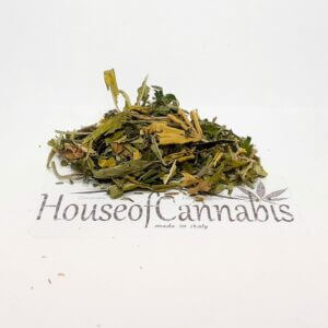 CBD trinciato Cannabis Light