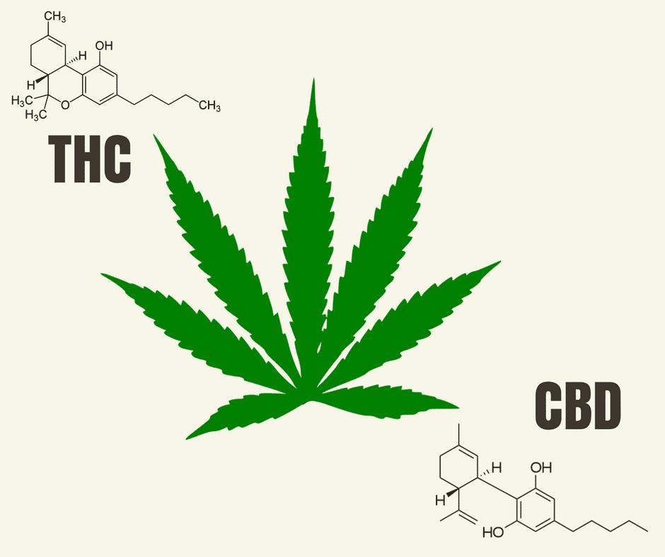 L6 - Che cosa sono THC e CBD