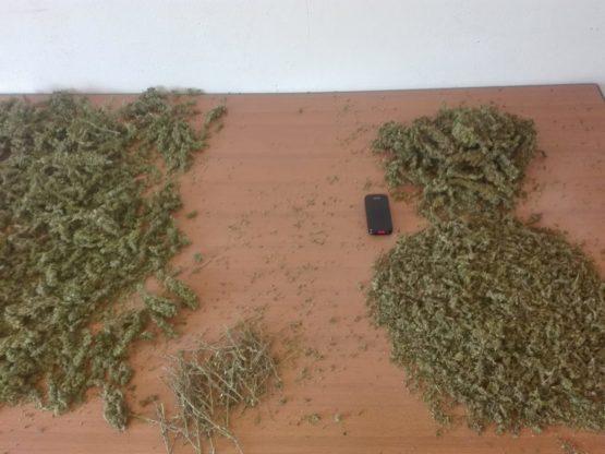 WhatsApp Image 2018 09 10 at 15.28.30 1 555x416 - Trinciato di Cannabis Light finola 50 g