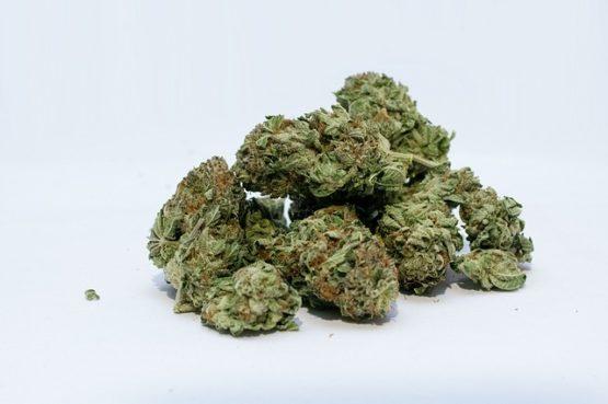 marijuana 2174302 640 555x369 - Cannabis Light Carmagnola