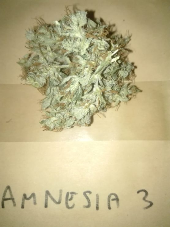 IMG 20190201 144458 555x740 - Talea Amnesia Cbd Houseofcannabis
