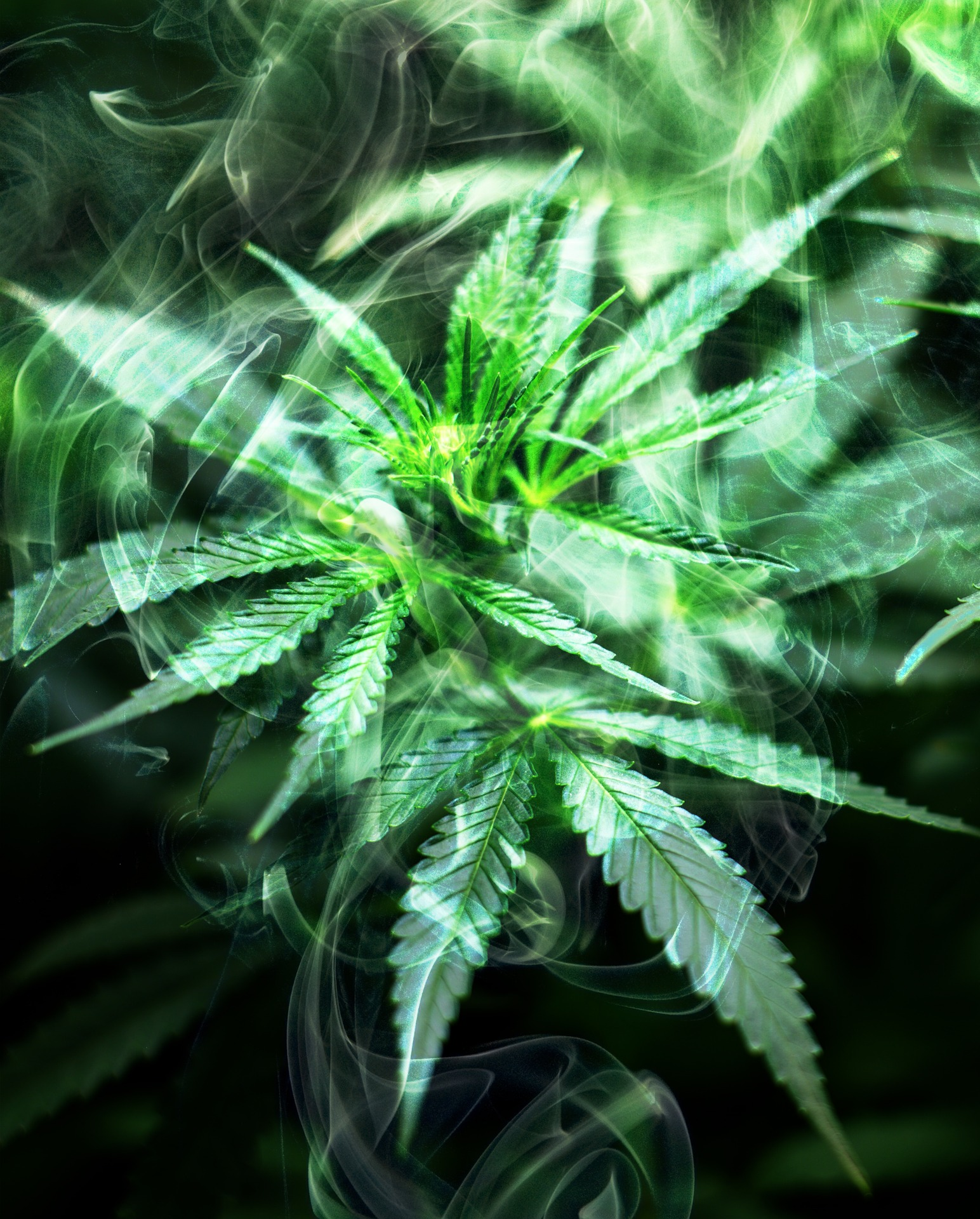 cannabis-2186917_1920